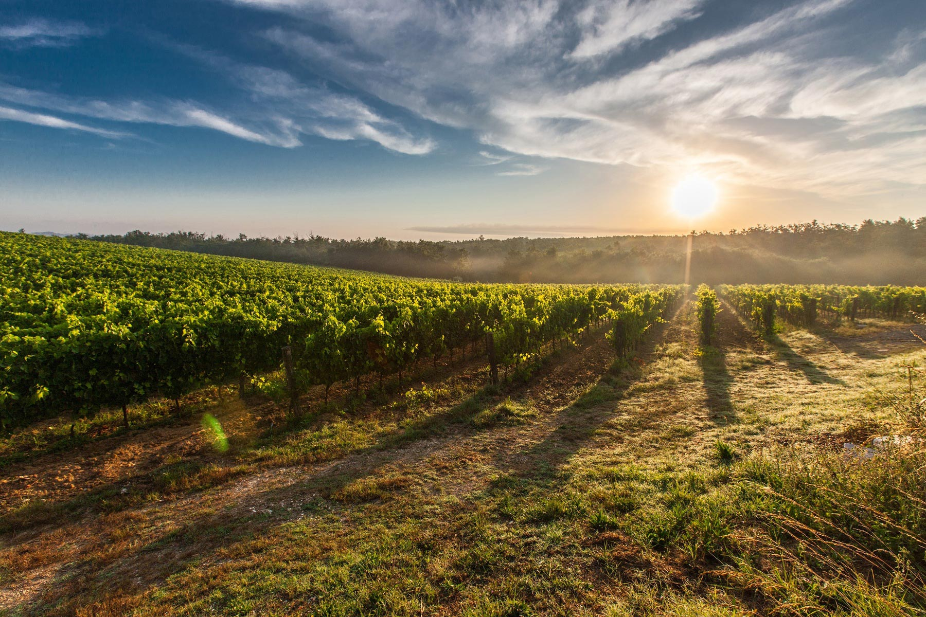 Wijnen, wijnen, wijnlekkerland!